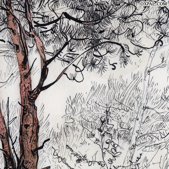 Ink Drawing - Pine Forest on an Island