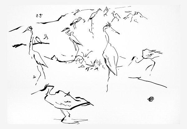 Murin-An Sketch01 Heron