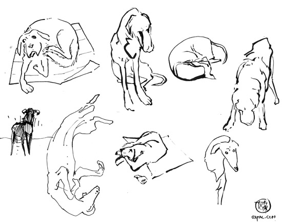 Dog drawings.