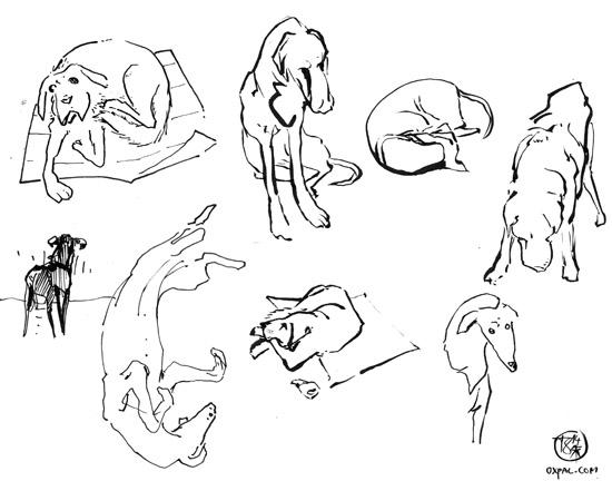 Dog drawings.