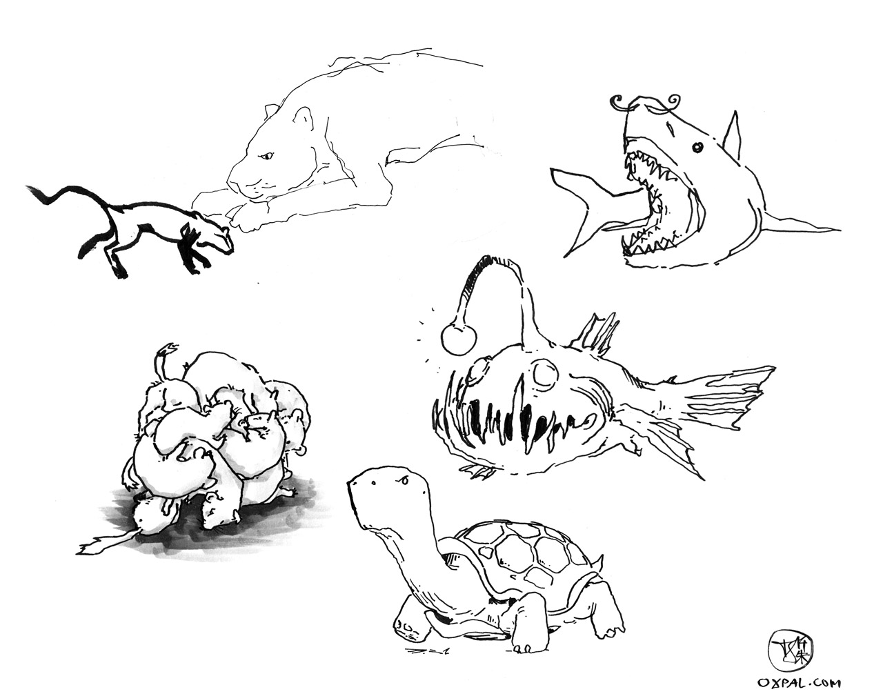 Combined animals drawings