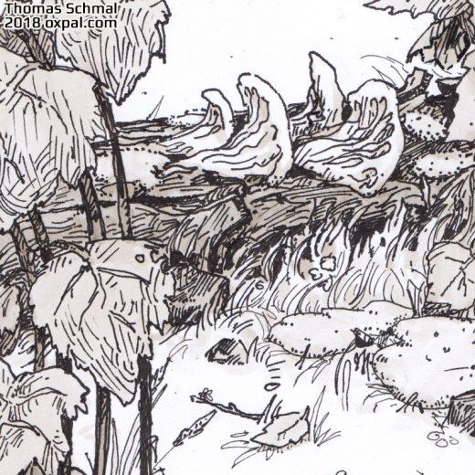 Detail View - Mushrooms
