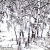 Detail view Birch trees