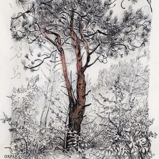 Pine Forest Clearing Ink Drawing